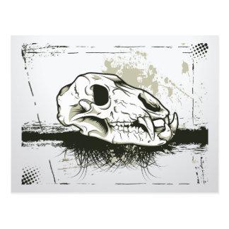 Skull Skulls Animal Skeleton Post Cards