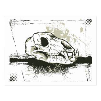 Skull Skulls Animal Skeleton Postcards
