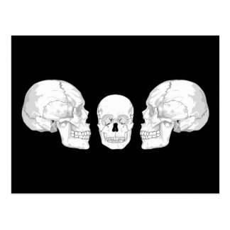 Skull Trio Postcard