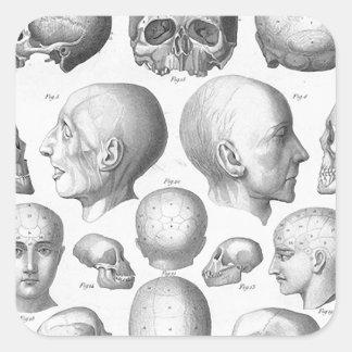Skull Types Stickers
