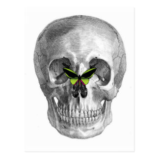 SKULL WITH BUTTERFLY ON NOSE PRINT POSTCARD