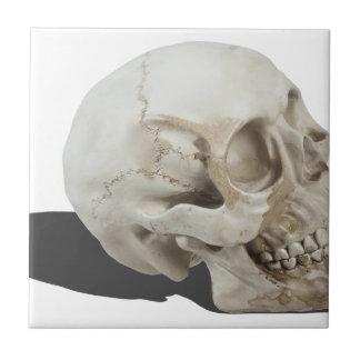 SkullCranialLines051213.png Ceramic Tiles