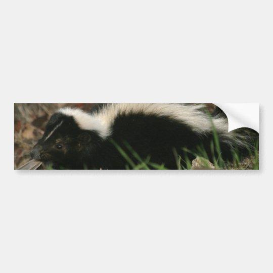 Skunk Behaviour  Bumper Stickers