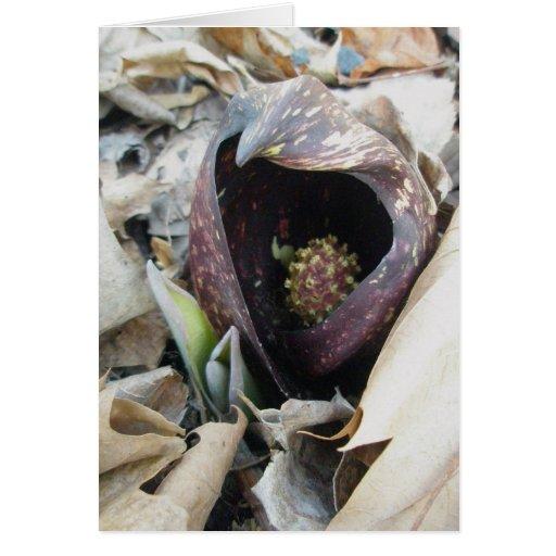 Skunk Cabbage Spath Note Card