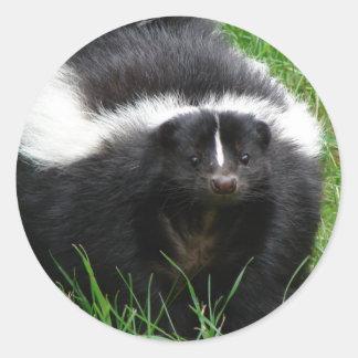 Skunk Photo Sticker