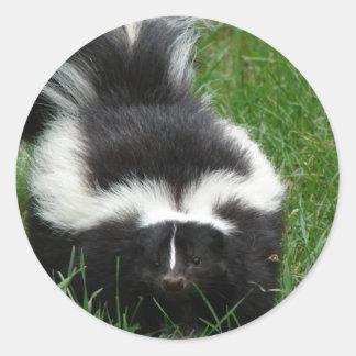 Skunk Sticker