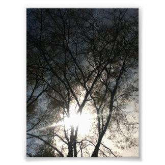 Sky Between The Trees Photo Art