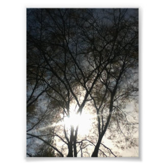 Sky Between The Trees Photo Print