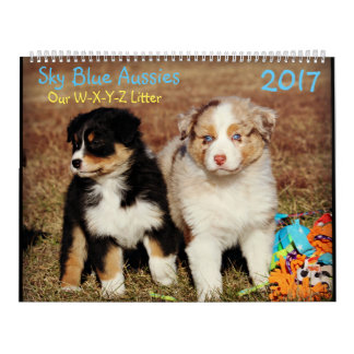 Sky Blue Aussies Fall Puppies - 2017 Calendar