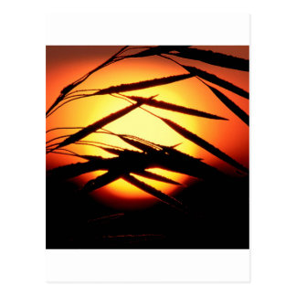 Sky Dewy Meadow Sunrise Oakland Michigan Postcard