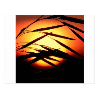 Sky Dewy Meadow Sunrise Oakland Michigan Post Cards