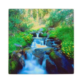 Sky Meadows in the Sierra Nevada Mountains Wood Coaster