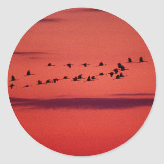 Sky Pigeon Sunset Stickers