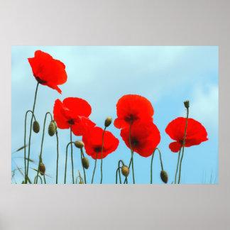 Sky poppy flowers posters