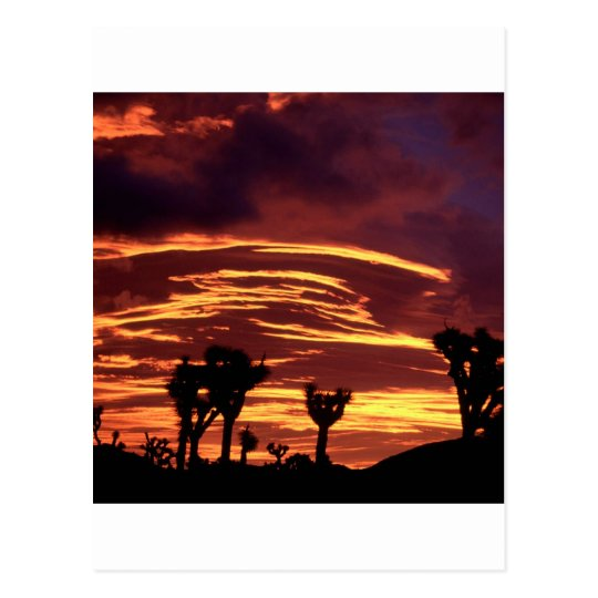 Sky Sunset Joshua Tree California Postcard