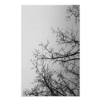Sky & Trees Entwined Photo Print