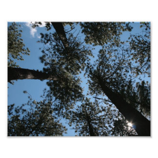 sky view through the trees photo art