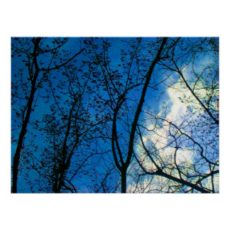 Skyline throught Fall Tree Scapes - Toronto Island Poster