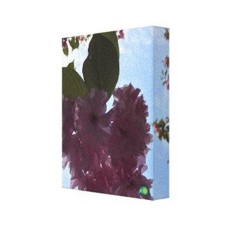 skylit petals stretched canvas print