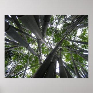 Skyward Bamboo Poster