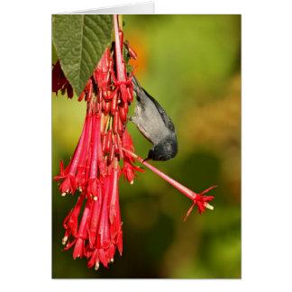 Slaty Flowerpiercer male Note Card
