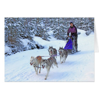 Sled Dog Racing Card