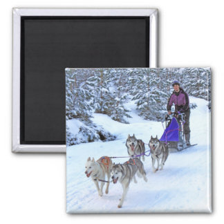 Sled Dog Racing Magnet
