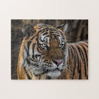 Sleek Tiger Wildcat Face Jigsaw Puzzle
