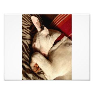 Sleep Tight Photo