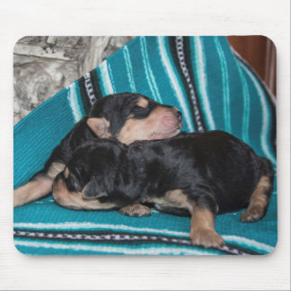 Sleeping Airedale Puppies Mouse Mat