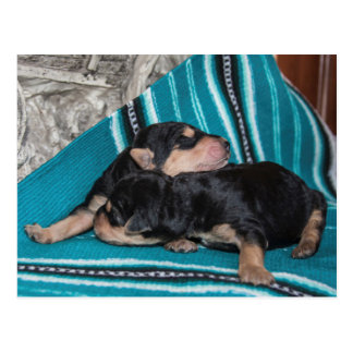 Sleeping Airedale Puppies Postcard