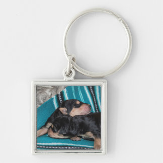 Sleeping Airedale Puppies Silver-Colored Square Key Ring
