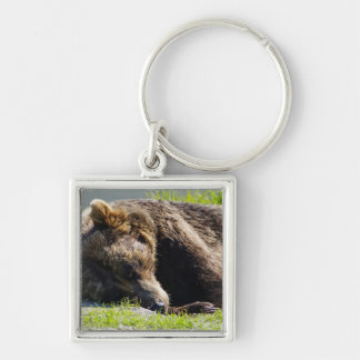 Sleeping Alaska Grizzly Bear Silver-Colored Square Key Ring