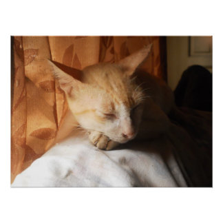 Sleeping Asian Ginger Cat By the Window Poster