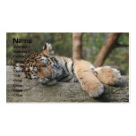 Sleeping Baby Tiger Pack Of Standard Business Cards