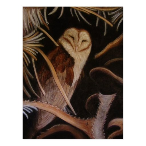 sleeping barn owl pastel animal painting postcard