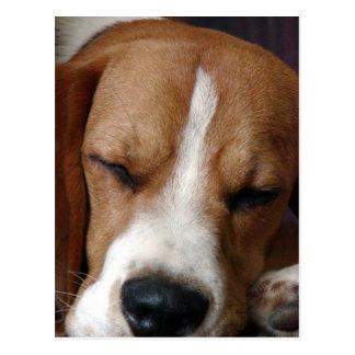 Sleeping Beagle Postcard