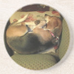Sleeping Beagle Sandstone Coaster