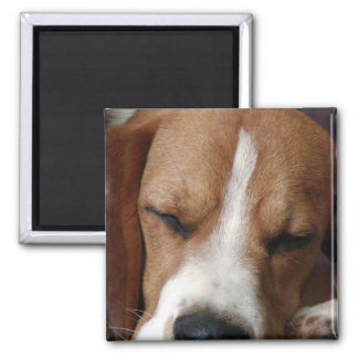 Sleeping Beagle Square Magnet