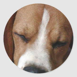 Sleeping Beagle Sticker