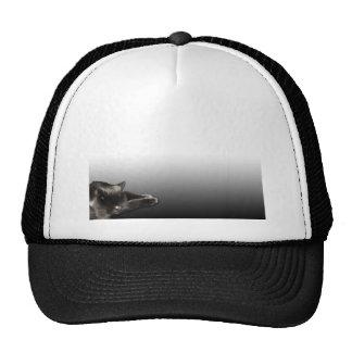 Sleeping Black Cat on Black Gradient Cap