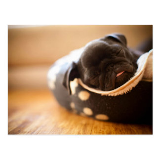 Sleeping black Chinese Pug Puppy Dog Postcard