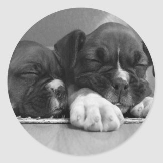 Sleeping Boxer puppies stickers
