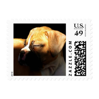 Sleeping boxer puppy small stamps