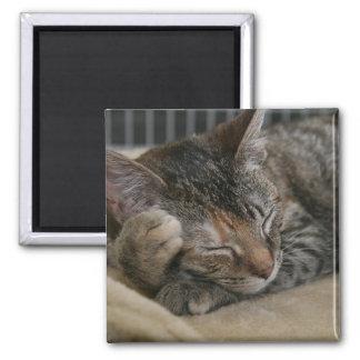 SLEEPING BROWN TABBY KITTEN MAGNET
