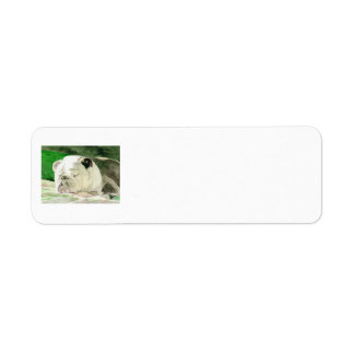 Sleeping Bulldog Return Address Label