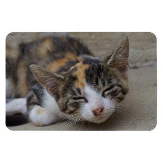 Sleeping Calico Kitten Vinyl Magnets