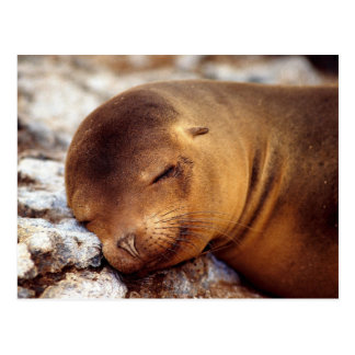 Sleeping California Sea Lion Postcard
