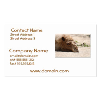 Sleeping Camel Pack Of Standard Business Cards
