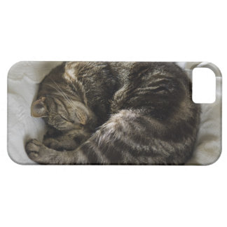 Sleeping cat barely there iPhone 5 case